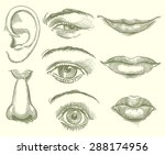 eyes  lips  nose  ear. hand... | Shutterstock .eps vector #288174956