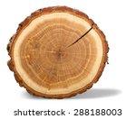 Tree ring  log  wood.