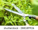 Gardening  Landscaped  Cutting.