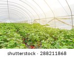 strawberry greenhouse | Shutterstock . vector #288211868