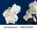 White Phalaenopsis Flowers On ...