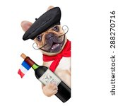 French Bulldog With  French ...