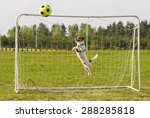 Funny Dog Playing Football As ...
