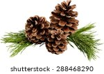 Pine  pine cone  christmas...