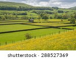 Yorkshire Dales Meadows In...