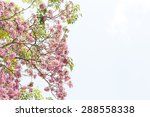 Tree With Pink Blossom Flowers...