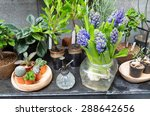 still life with hyacinth around ... | Shutterstock . vector #288642656