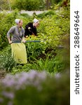 Small photo of SUGARCREEK, OH - MAY 19, 2015: Amish women working in the garden on a spring morning.