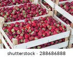 Boxes Of Strawberries In Farme...