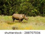 rhino mud bathing in yellow... | Shutterstock . vector #288707036