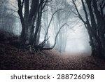 Trail Through A Mysterious Dar...