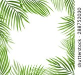 Palm Leaves Vector Background....