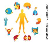 medical background. human... | Shutterstock . vector #288862580