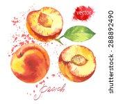 watercolor peach   Shutterstock .eps vector #288892490