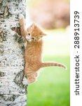 Stock photo little red kitten on the tree 288913739