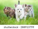 Stock photo group of three little kittens 288913799