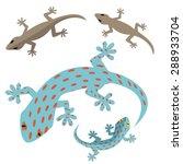home lizard and gecko lizard in ...   Shutterstock .eps vector #288933704