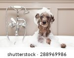a cute little terrier breed dog ... | Shutterstock . vector #288969986
