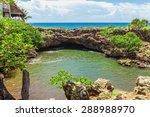 Panama  Tree  Palm.