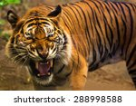 close up of a tiger's face with ... | Shutterstock . vector #288998588