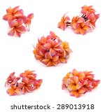 tropical flowers frangipani ... | Shutterstock . vector #289013918