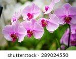 cymbidium orchid flower. | Shutterstock . vector #289024550