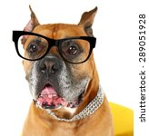 cute dog with eyeglasses... | Shutterstock . vector #289051928