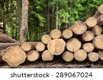Landscape With Large Woodpile...
