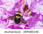 Bumblebee  On Purple...