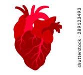 human's heart  red heart ... | Shutterstock .eps vector #289123493