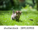Stock photo cute little kitten running through the green lawn mewing 289133903