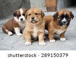 Stock photo cute puppy 289150379