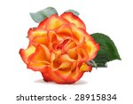 rose close up on white... | Shutterstock . vector #28915834