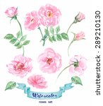 watercolor wild rose. hand... | Shutterstock .eps vector #289210130