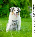 Stock photo australian shepherd puppy and cat sitting together on the green grass 289267976