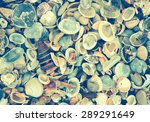 Variety Of Sea Shells From...