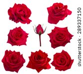 Stock photo collage of eight red roses isolated on white background 289337150