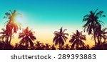 Tropical Paradise Design Banner ...