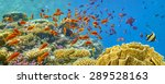 coral reef and fish  red sea ...   Shutterstock . vector #289528163