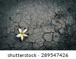 Fallen Flower On Dry Crack...