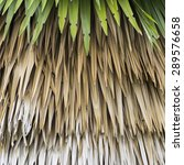 Small photo of Palm leaf for background It sort of leaves overlapping leaves.