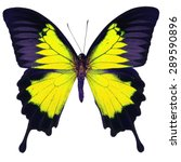 Stock photo beautiful yellow butterfly blue emperor mountain blue papilio ulysses in fancy color profile 289590896