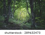 Green Forest Light