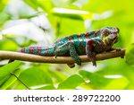 chameleon in a zoo | Shutterstock . vector #289722200