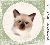 Vintage Card With Thai Kitten....
