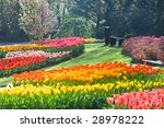 Rainbow Of Tulips In  The Park...