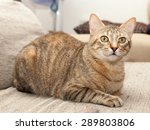 Stock photo grey cat lying on bed 289803806