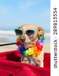 funny dog with sunglasses on... | Shutterstock . vector #289815554