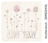 Clover Meadow With Lots Of...