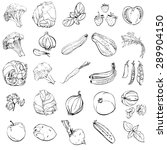 set of hand drawn sketches of... | Shutterstock .eps vector #289904150